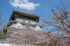 小倉城と桜 (1)