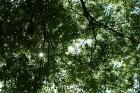 森林木漏れ日 (1)