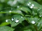 雨上がり (1)